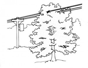 tree_in_line